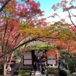紅葉見に行こうよう、平成最後の紅葉と戦争遺跡めぐり ~行きあ旅ばっ旅~