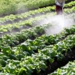 化学肥料と農薬が生態系に及ぼす影響