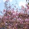 【東北の風の道】(第6号)さよなら三月、また来て四月