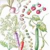 富士山麓有機農家シードバンク Seed Bank - ホーム | Facebook
