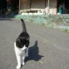 田代島、猫のいる風景【旅レポ】