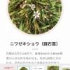 野草の証明 by monomoney