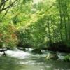 【東北の名所】初夏の奥入瀬渓流