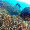 今も年に数度「新種」発見…研究者も驚く独特の世界 沖縄・大浦湾を知っていますか? | 沖縄タイムス+プラス ニュース | 沖縄タイムス+プラス