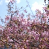 【東北の風の道】(6号)さよなら三月、また来て四月
