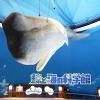 鯨と海の科学館 - ページ情報 | Facebook